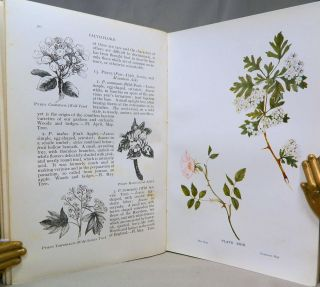 Flowers of the Field; [Revised edition of 1855 edition]